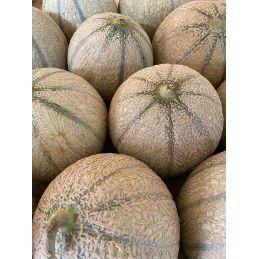 Melon à l'unité
