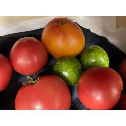 Tomates anciennes par 1 kilo