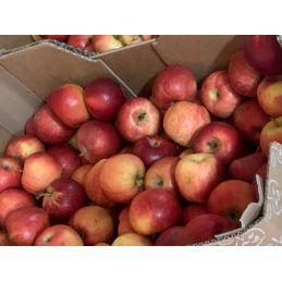 Pomme gala au kilo