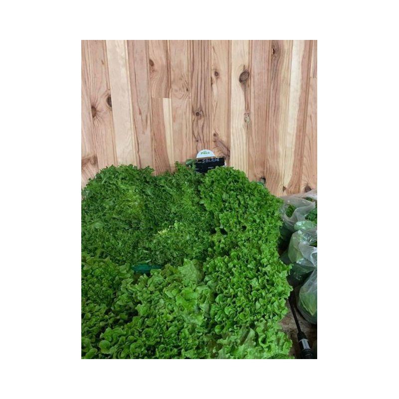 Salade feuille de chêne vert ou rouge